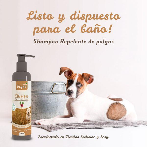 shampoo-pulgas